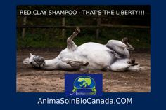 Horse - Red Clay Shampoo / Cheval - Shampoing a l'argile Rouge