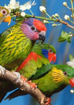 Why They Are Called Love #Bird?