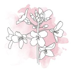 #4. Flowers in Illustrator. by Annemarie Gorissen