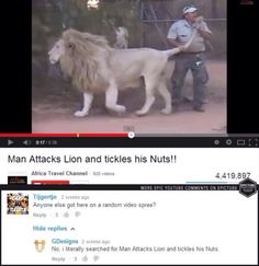Man Attacks Lion and tickles his Nutsl! Dankest Memes, Funny Memes, Hilarious, Reaction Pictures, Funny Pictures, Funny Youtube Comments, Comedy, Paws And Claws, Africa Travel