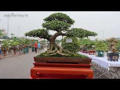 Top Vietnam Bonsai exhibition 2018, Top 10 cây bonsai đẹp nhất ngang tầm... Bonsai Art, Christmas Ornaments, Holiday Decor, World, Plants, Christmas Jewelry, The World, Plant, Christmas Decorations