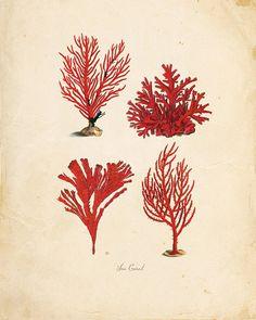 Vintage corail sur Antique Ephemera imprimer P103 8 par OrangeTail