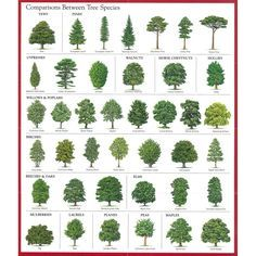 tree identification - Google Search