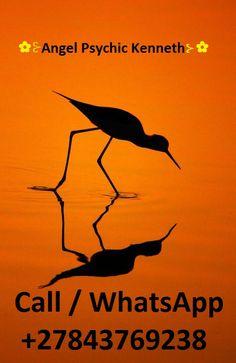 ஜஜஜ Black-Winged Stilt's Silhouette, By Bhanu Kiran Botta. Cool Photos, Beautiful Pictures, Shadow Silhouette, Sunset Silhouette, Silhouette Pictures, Bird Silhouette, Silhouette Photography, Orange Aesthetic, Black Wings