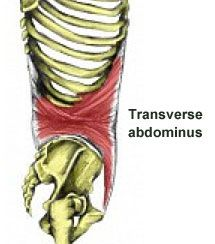 Contracting the Core Muscles  This is the first stage of core stability exercises and sets the stage for all subsequent strengthening techniques. The following techniques are methods by which you can engage your core muscles. -- Transverse obdominus muscle