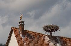 Storks Ribeauvillé