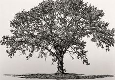 Pencil Drawing Techniques How to draw realistic pen drawings tutorial. A technical pen sketch of a tree. Fine Art Drawing, Art Drawings For Kids, Cool Drawings, Face Drawings, Realistic Pencil Drawings, Pencil Art Drawings, Realistic Sketch, Flower Drawing Tutorials, Art Tutorials