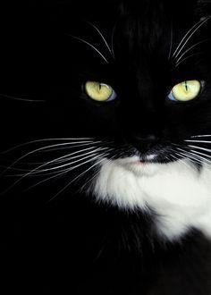 Le mystère chat....