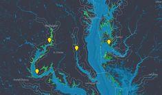 stamen design | Grasses, Watermen & Bathymetry | Interactive maps of Chesapeake Bay Grasses for the EPA