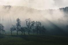 The first sun rays on a cold autumn day Upper Austria [4898x3266] [OC] http://ift.tt/2lYuzu3