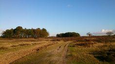 Tafelbergheide Blaricum Holland