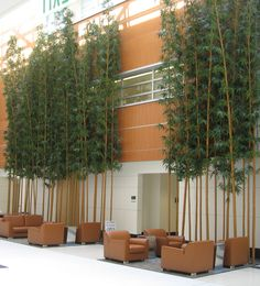 Fabricated Golden Bamboo at the UC Davis Medical Center in Sacramento, CA. Additionally, our fabricated Golden Bamboo canes and their foliage are Ultraviolet Resistant, ensuring lasting quality when used for outdoor purposes.