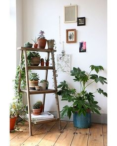 Verde é sempre bem-vindo na decoração. Por isso, listamos no site de Casa e Jardim as imagens mais pinadas do Pinterest para inspirar você a criar um novo espaço em seu ninho. Tem soluções para pequenos e grandes espaços, jardins verticais, plantas suspensas e ideias para vasos. Assim como esse cantinho verde, onde a trepadeira sobe pelo apoio da escada com prateleiras que dá vida ao jardim vertical. Repare na mistura de espécies e tamanhos. Confira mais em casaejardim.com.br (Foto…