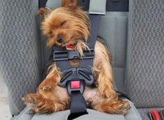 pup in a car seat.
