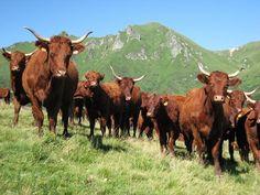 Réserve naturelle nationale de Chastreix-Sancy - Réserves naturelles - Parc naturel régional des Volcans d'Auvergne