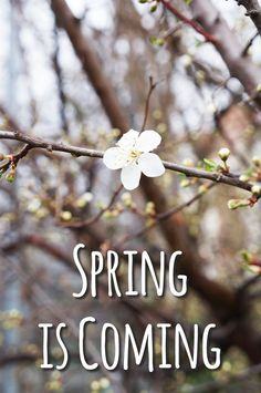 Today I'm talking about the beginning of spring, the horrible weather, painting walls, gaming and other current happenings. Beginning Of Spring, Spring Is Coming, Glitter, Flowers, Start Of Spring, Royal Icing Flowers, Flower, Florals, Floral