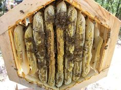 Hex Warre Hive Design