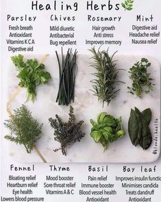Nothing beats natural healing. The cure for every dis-ease and illness is already in nature. Just reprogram your… by healing herbs on medicinal plants Herbal Magic, Herbal Remedies, Home Remedies, Natural Remedies, Health Remedies, Magic Herbs, Herbal Tea, Plant Magic, Medicinal Plants