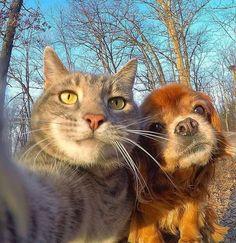 Cat Selfie http://ift.tt/2rHV9Xh