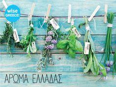 WiseGreece #herbs #thyme #basil