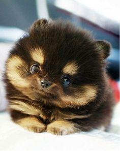 ahhhh too cute!