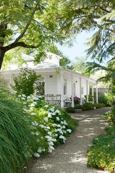 California Farmhouse and Garden 'Blushing Bride' hydrangeas and 'Morning Light' ornamental grasses soften the path to this guesthouse.'Blushing Bride' hydrangeas and 'Morning Light' ornamental grasses soften the path to this guesthouse.