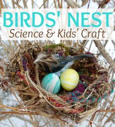 Birds' Nest Science and Kids' Craft