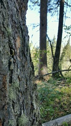 A very sneaky geocache. Can you spot the nano in the woods?  (pic by StevensAdInfinitum on Twitter)  #IBGCp