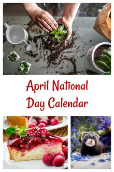 April is National Gardening Month and we also celebrate Cherry Cheesecake Day and Ferret Day. Find out about the other National Days in April on Always the Holidays. #nationaldays #holidays List Of National Days, Cheesecake Day, National Day Calendar, Days Of The Year, Ferret, Cherry, Gardening, Holidays, Holidays Events
