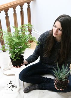 For eons humans have been bringing things home that don't necessarily belong there. In my quest to find the best houseplant for my apartment, I'm considering five that changed the way people live, from ancient Babylon to the office park.