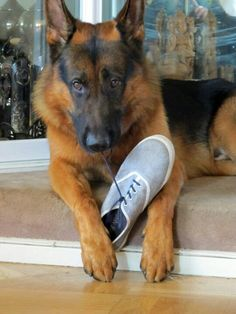u weren't going to wear this shoe were u? Looks like my Kadin :)