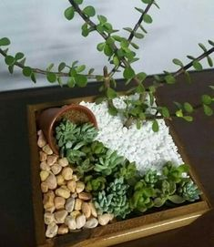 If there's one fast growing trend in plant arrangements, it's the world of ideas for succulent garden. Check out the best outdoor design ideas # succulent Gardening 15 Awesome Succulent Garden Ideas for Uniqueness in Your Garden Dish Garden, Garden Art, Garden Plants, Indoor Plants, Indoor Outdoor, Indoor Cactus, Balcony Garden, Indoor Herbs, Garden Seeds
