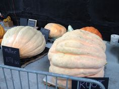 Giant pumpkin contest at #heirloomexpo12