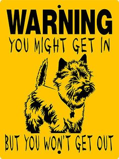 So cute :-) CAIRN TERRIER WARNING A...
