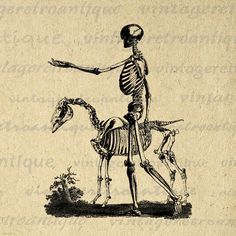 Printable Image Skeleton with Horse Graphic Download Digital Illustration Vintage Clip Art Jpg Png Eps 18x18 HQ 300dpi No.2216 @ vintageretroantique.etsy.com