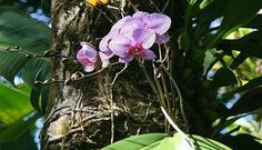 Orchid care doesn't have to be hard! Proper watering of orchids is an important part of how to care for orchids. Learn how to tell if your Phalaenopsis orchid needs water and get tips on the best way to water your orchids. House Plants, Container Flowers, Plants, Fertilizer, Amazing Flowers, Orchid Fertilizer, Orchids In Water, Orchid Care, Container Gardening Vegetables