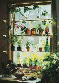 40 Super Ideas Kitchen Window Shelves For Plants Indoor Garden, Home And Garden, Plantas Indoor, Window Shelves, Glass Shelves, Display Shelves, Display Window, Kitchen Shelves, Shelving