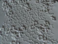 Relief of tex-tile tile made by lace #tiles #transparant #white #translucent #porcelain #15x15 #bathroom #textiles #wall #decoration #led #imprint #relief #barbaravos #wallcovering #kitchen #shower #home #interior #design #glaze #backsplash #flower #pattern #coral #fabric