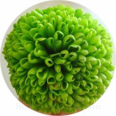 Hoa cúc Ping pong tươi ướp khô