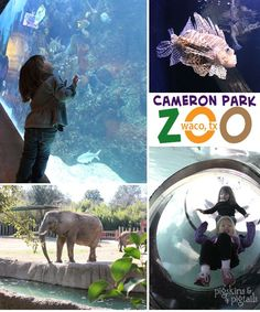 Cameron Park Zoo in