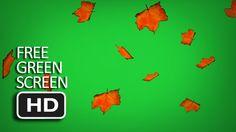 Free Green Screen - Falling Autumn Leaf Free Green Screen, Autumn Leaves, Fall Leaves, Autumn Leaf Color