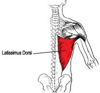 Give your back a boost with this Lats Workout & Lats Exercises to add width, thickness and shape. Latissimus Dorsi Exercises, Weight Loss Goals, Weight Lifting, Lower Back Exercises, Lifting Workouts, Happy Minds, Get Healthy, Health Fitness, Hoe