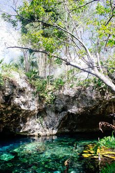 Going on a guided diving tour through the Gran Cenote in Tulum.