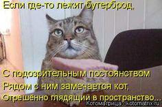 Если где-то лежит бутерброд, С подозрительным постоянством  Рядом с ним замечается кот, Отрешённо глядящий в пространство...
