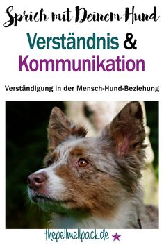 So kannst Du auf Augenhöhe mit Deinem Hund kommunizieren | Hund | Verständigung | Verständnis | Kommunikation | Tierkommunikation | Training | thepellmellpack.de