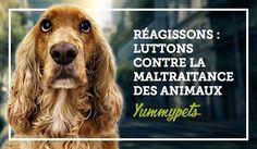 Luttons ensemble contre la maltraitance des animaux ! #animaux #pets #chien #chat #nacs #yummypets   https://www.yummypets.com/mag/2015/06/22/dossier-luttons-contre-la-maltraitance-des-animaux-57939