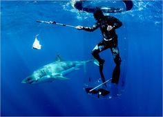 Shark tube!