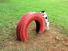 For his Eagle Scout project, Jack Tamas installed agility equipment, like this tire tunnel at Madison Dog Park.