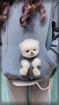 Cute Teacup Puppies, Cute Baby Puppies, Cute Animals Puppies, Super Cute Puppies, Baby Animals Super Cute, Cute Wild Animals, Baby Animals Pictures, Cute Animal Videos, Cute Little Animals