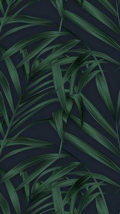 tropical wallpaper desktop iPhone Wallpapers is part of Tropical Iphone Wallpaper Iphone Wallpapers - Tree Wallpaper Iphone, Plant Wallpaper, Tropical Wallpaper, Green Wallpaper, Nature Wallpaper, Phone Backgrounds, Wallpaper Backgrounds, Vegetal Concept, Floral Iphone Case